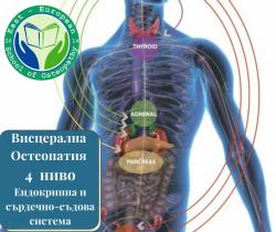 Висцерална остеопия 4 ниво – Ендокринна и сърдечно-съдова система